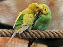 Why 13 Parrots Were Produced Before A Delhi Court