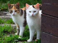 UK Neighbour's Fight Over Pet Cat Leads To Costly Court Battle