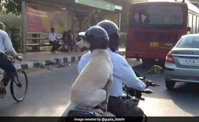 This Helmet-Wearing Dog From Delhi Has Won Twitter's Heart