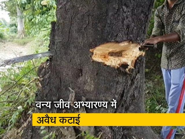 Video : भारत में घुसकर जंगल काट रहे नेपाल के लकड़ी तस्कर