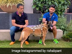 """Rishabh Pant Relishes """"Good Vibes"""" With MS Dhoni And His Dogs. See Pictures"""