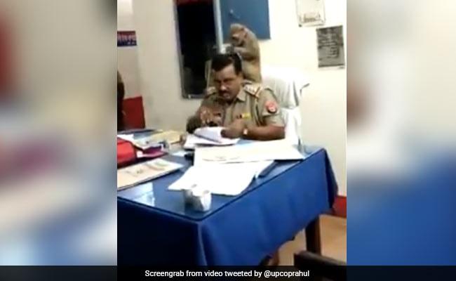 थाने के अंदर बंदर ने पुलिसकर्मी को दी 'Head Massage', वायरल हुआ ये VIDEO