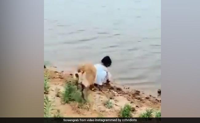 Viral Video: नदी में गेंद लेने जा रही थी ये नन्हीं बच्ची, तभी आया डॉगी और फिर...