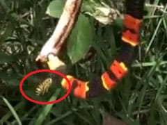 दो सांपों की लड़ाई के बीच आई मधुमक्खी, हैरान कर देने वाला VIDEO हुआ वायरल