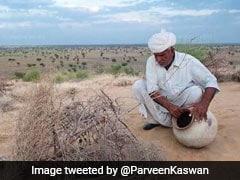 दमदार! 75 वर्षीय इस बुजुर्ग ने 50 सालों में लगाए 27 हजार पेड़