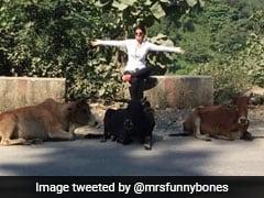 ट्विंकल खन्ना ने 5 गायों के साथ पोस्ट की फोटो, खुद को बताया छठी...देखें Viral Pic