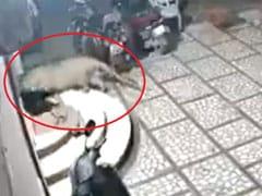 चुपके से घर के अंदर घुसा तेंदुआ और अचानक कर दिया कुत्ते पर Attack, फिर हुआ ऐसा... देखें VIDEO