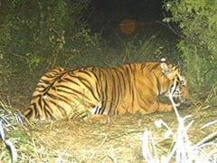 How Soliga Tribals, Elephants And A Dog Found An Elusive Karnataka Tiger