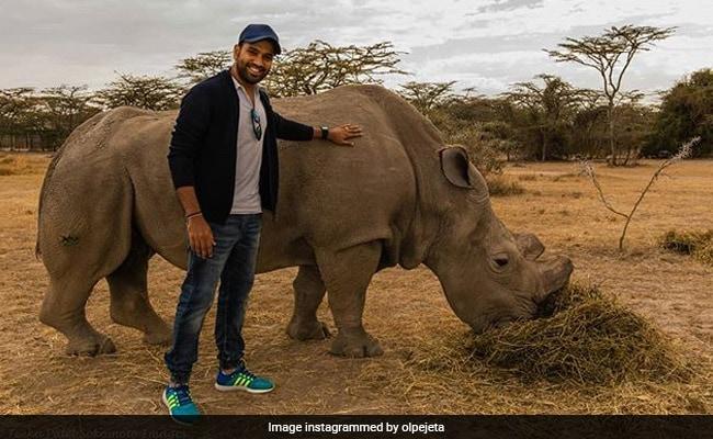 In Pics: When Rohit Sharma Met World's Last Male Northern White Rhino In 2015