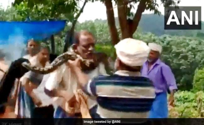 Python Coils Itself Around Kerala Man's Neck In Horrifying Video