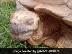"Alagba, 344-Year-Old Tortoise, ""Oldest"" In Africa, Dies"