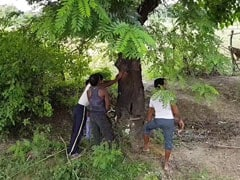 बलरामपुर के सुहेलदेव वन्य जीव अभयारण्य में लकड़ी की तस्करी पर NDTV का खुलासा, जानें यहां कैसे होता है काला कारोबार