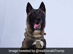 """Hero"" Dog Who Chased ISIS Chief To Get White House Homecoming: Donald Trump"