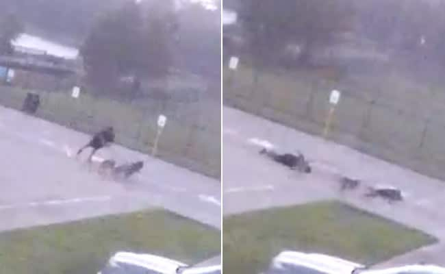 On Camera: Man Collapses Instantly After Being Struck By Lightning. Then...