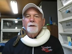 Thieves Run Away With Man's Bag. Inside Were Four Pythons