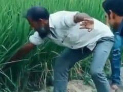 Viral Video: सांप पकड़ने की कर रहे थे कोशिश, निकला कुछ ऐसा देखकर कहेंगे OMG!