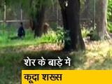 Video : दिल्ली: चिड़ियाघर के बाड़े में घुसकर सहलाने लगा शेर के बाल