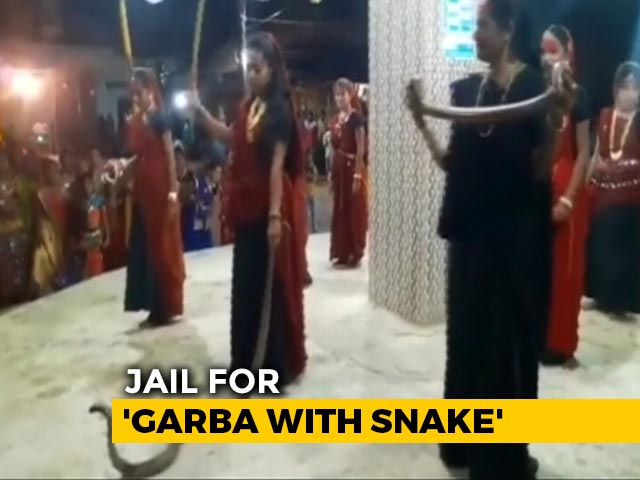 Video : Gujarat Women Seen In Video Holding Cobras During Garba, 5 Arrested