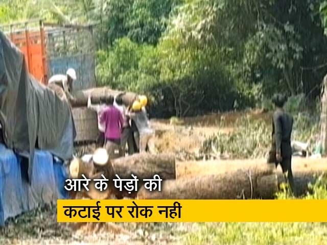 Videos : आरे को जंगल घोषित करने से बॉम्बे हाइकोर्ट ने  किया इनकार