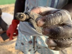 """No Reproduction"": Warming Climate Turning Baby Sea Turtles Into 1 Gender"
