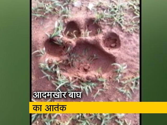 Videos : बंदीपुर टाइगर रिजर्व के आसपास इलाके में बाघ का आतंक