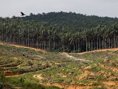 Don't Buy Palm From Malaysia, Group Tells Members After Kashmir Criticism