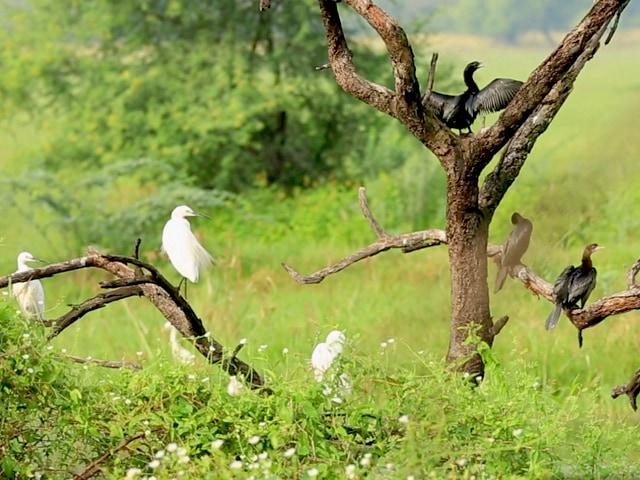 "Video : Sponsored: Bharatpur Bird Sanctuary - A Ride Into The ""Birder's Paradise"""