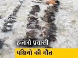 Video : राजस्थान: सांभर झील क्षेत्र में सैकड़ों प्रवासी पक्षी मृत पाए गए