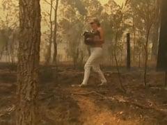 Online Fundraiser For Bushfire-Hit Koalas Tops Australia's $1 Million