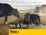 Video : एमपी: गाय टैक्स लगाने पर विचार कर रही सरकार