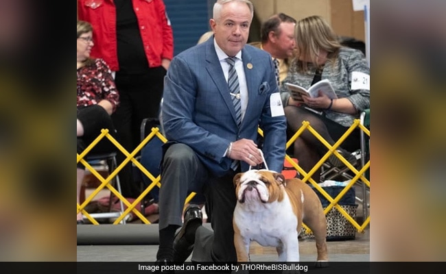 Thor The Bulldog Wins Top Prize At National Dog Show