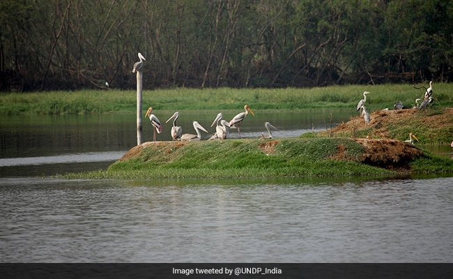 India Gets $43 Million From UNDP To Boost Climate In 3 Coastal Regions