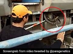 ரயிலுக்குள் புகுந்து அச்சுறுத்திய 10 அடிநீள ராஜ நாகம்! பயணிகள் ஓட்டம்!! #Video