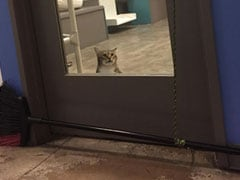 """Rogue Shelter Cat Is Viral For """"Repeatedly"""" Letting Other Cats Out"""