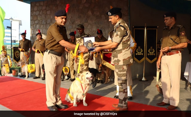 """Born As A Dog, Retired As A Soldier"": CISF Honours Canines On Retirement"