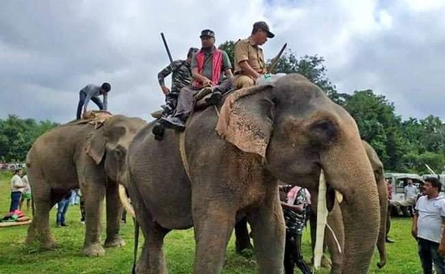 How Assam MLA Helped Capture 'Laden', A Rogue Elephant That Killed 5