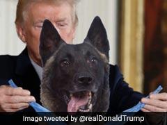 ट्रंप ने बगदादी पर हमले के दौरान घायल हुए कुत्ते की फर्जी तस्वीर की ट्वीट
