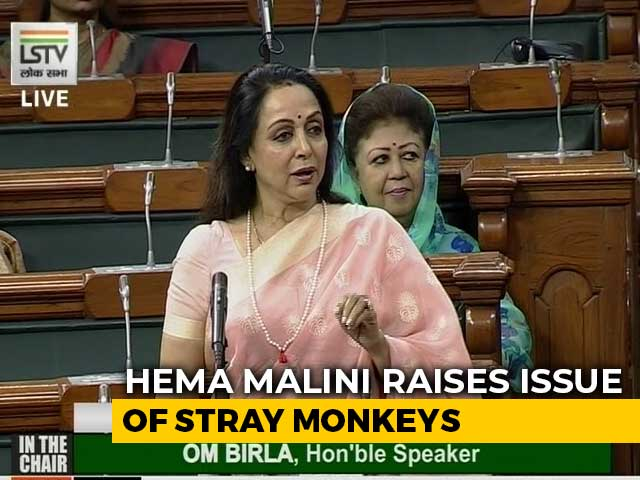 "Video : ""Frooti, Samosa"" In Hema Malini's Parliament Discussion On Monkeys"