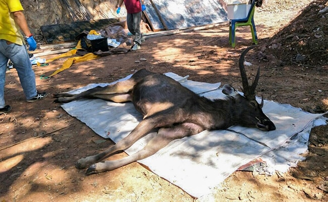 Deer found dead with 15 pounds of trash in stomach
