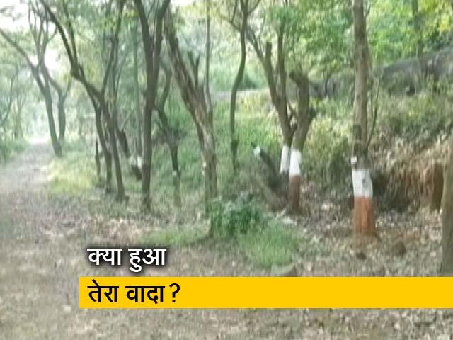 Videos : मर गए आरे में ट्रांसप्लांट किए गए 61 फीसदी पेड़!