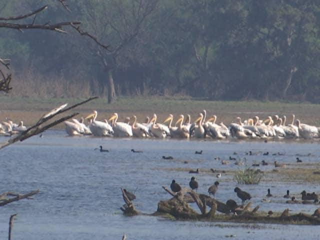Videos : स्पांसर्ड : पर्यटन का प्रमुख केंद्र है पूर्वी राजस्थान