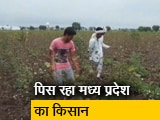 Video : केंद्र और मध्य प्रदेश सरकार के बीच फंसी किसानों की सहायता राशि
