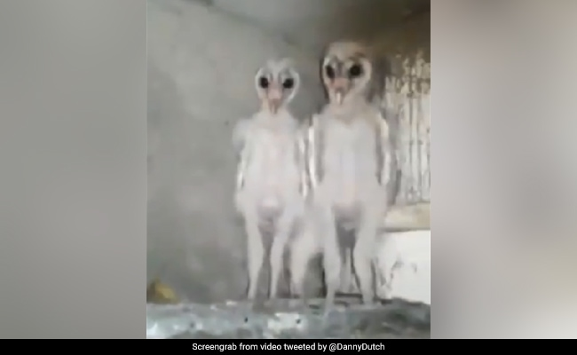'Aliens' In Viral Video With 12 Million Views Turn Out To Be...
