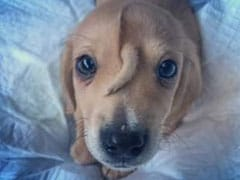 Meet Narwhal, The Puppy Born With An Extra Tail On His Head