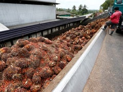 India Resumes Buying Malaysian Palm Oil After Discount: Report