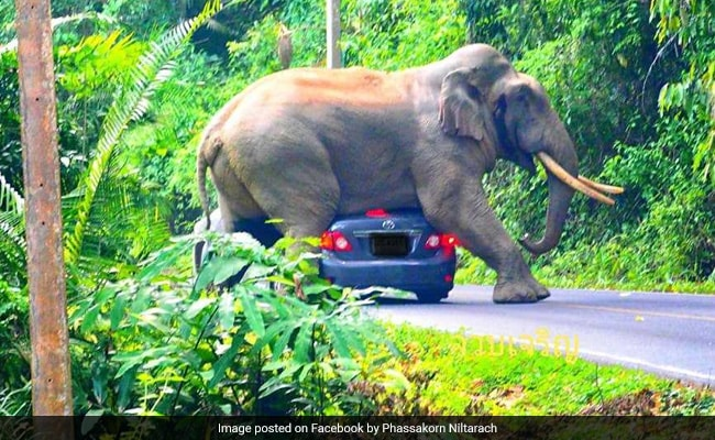 Elephant Sits On Car In Viral Video. Narrow Escape For Tourists Inside