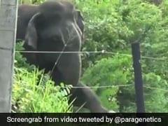 जंगली हाथी ने जबरदस्त जुगाड़ से तोड़ी बिजली की तार, ऐसे की सड़क पार, देखें VIDEO