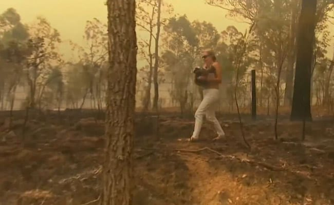 Online fundraiser for bushfire-hit koalas tops Aus$1 mn