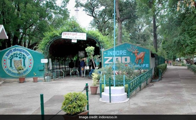 Debt-Ridden Man Enters Indore Zoo's Tiger Enclosure To Commit Suicide