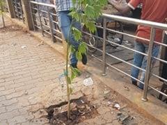 NDTV की खबर का असर: महोबा में रातों रात लगने लगे पौधे, जांच के लिए बांदा पहुंची अधिकारियों की टीम
